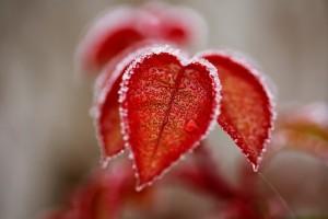 leaves-4673997__340